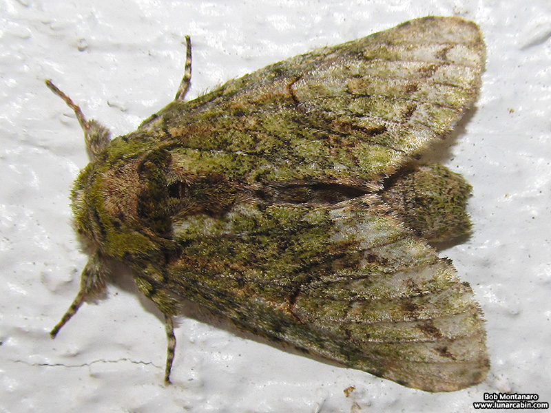 ORCA_moths_131230_2