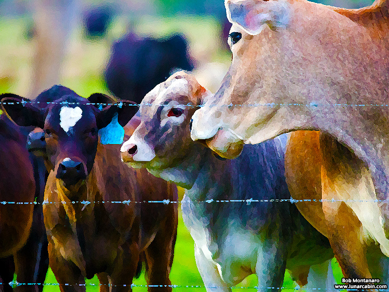 ranch_walk_140212_11