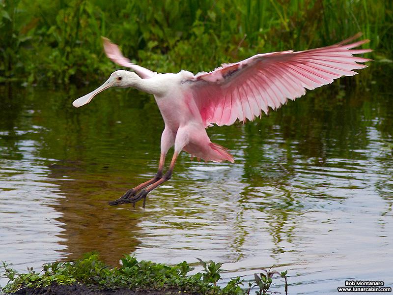 Orlando_Wetlands_140323_1