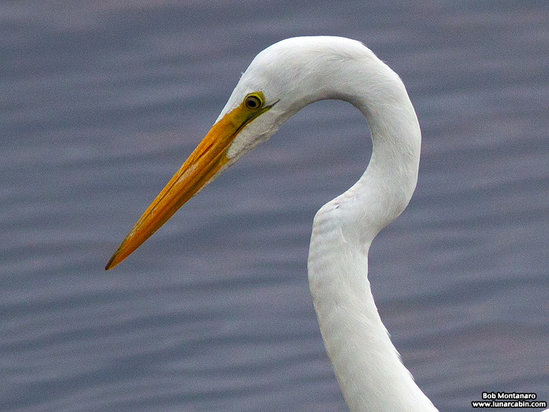 Orlando_Wetlands_140323_13