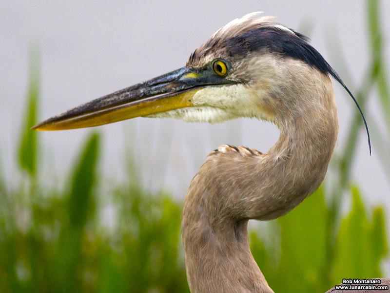 Orlando_Wetlands_140323_14