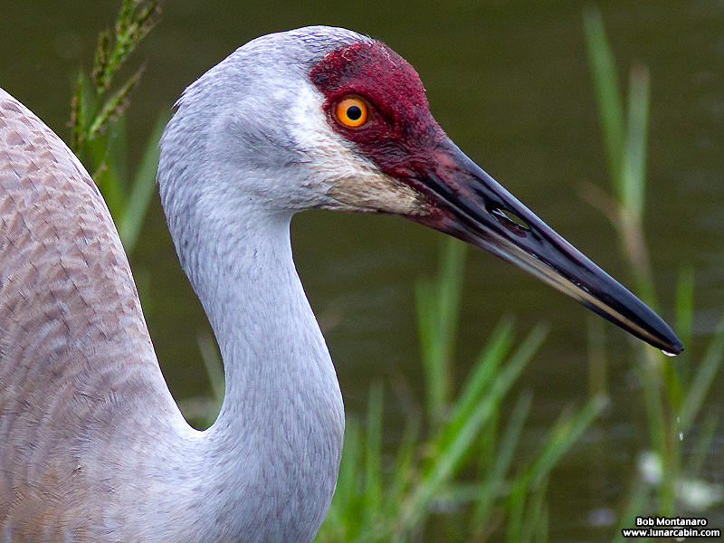 Orlando_Wetlands_140323_16