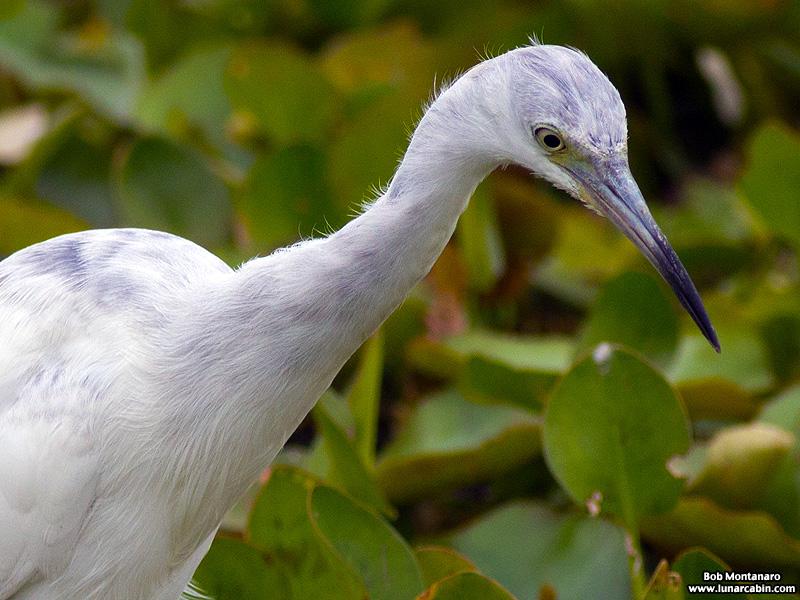 Orlando_Wetlands_140323_18