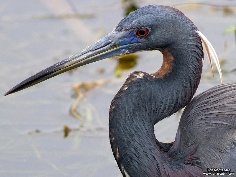 Orlando_Wetlands_140323_20