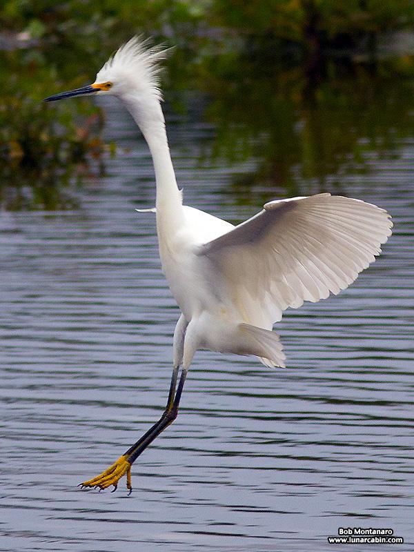 Orlando_Wetlands_140323_4