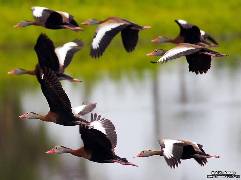 Orlando_Wetlands_140323_8