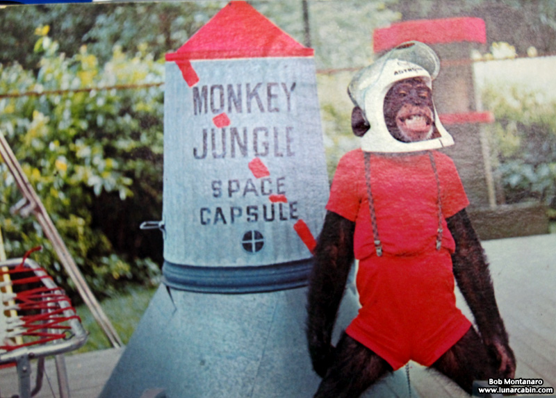 space_monkeys_140610_5