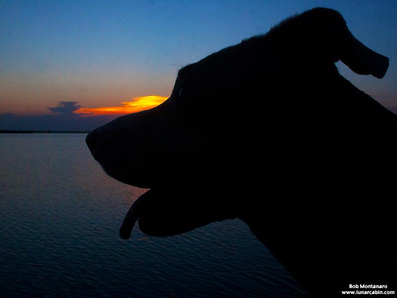 dog_days_of_summer_10