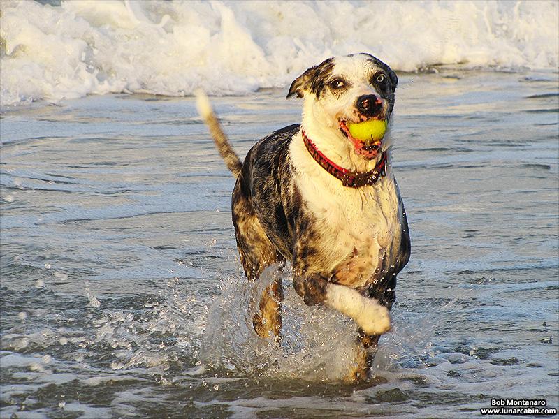 dog_days_of_summer_4