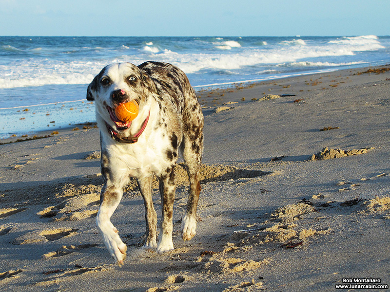 dog_days_of_summer_8