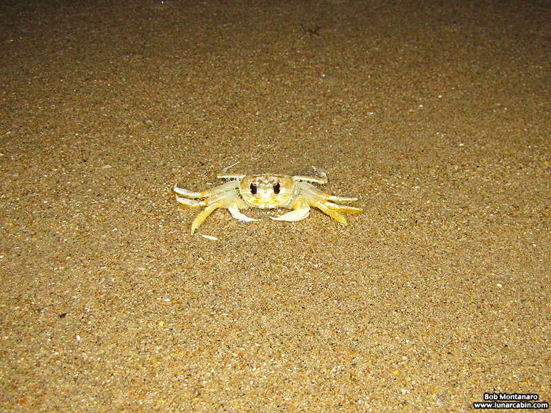 ghost_crab_140912_5