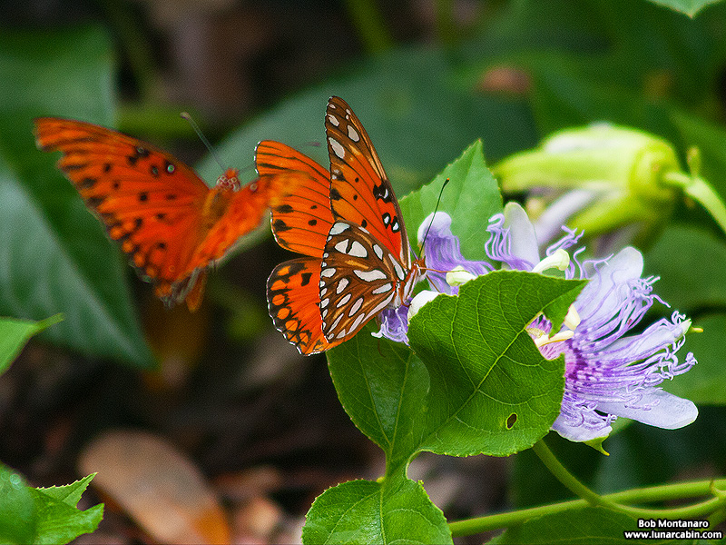 wildflower_symposium_140921_1