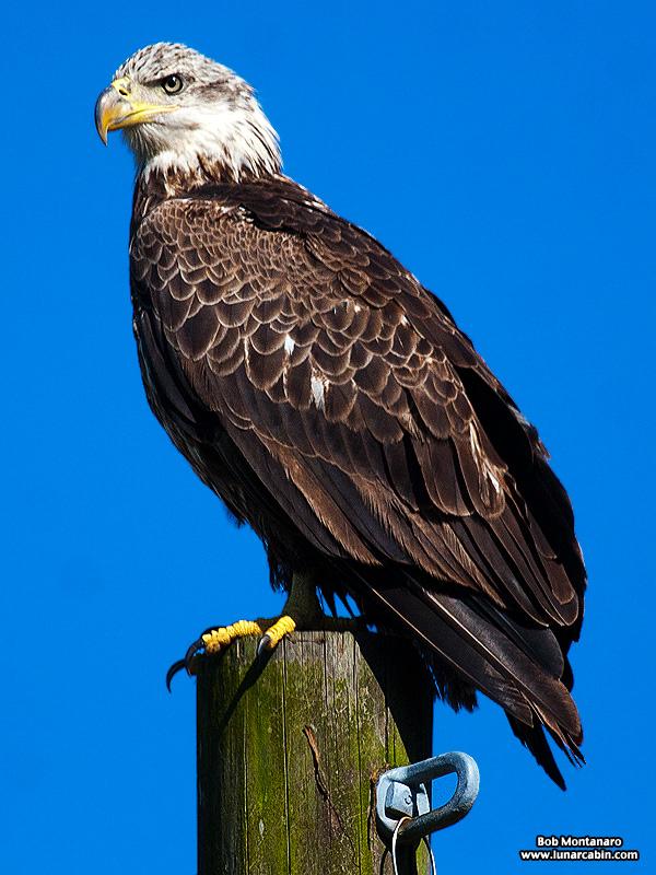 eagle_150107_2