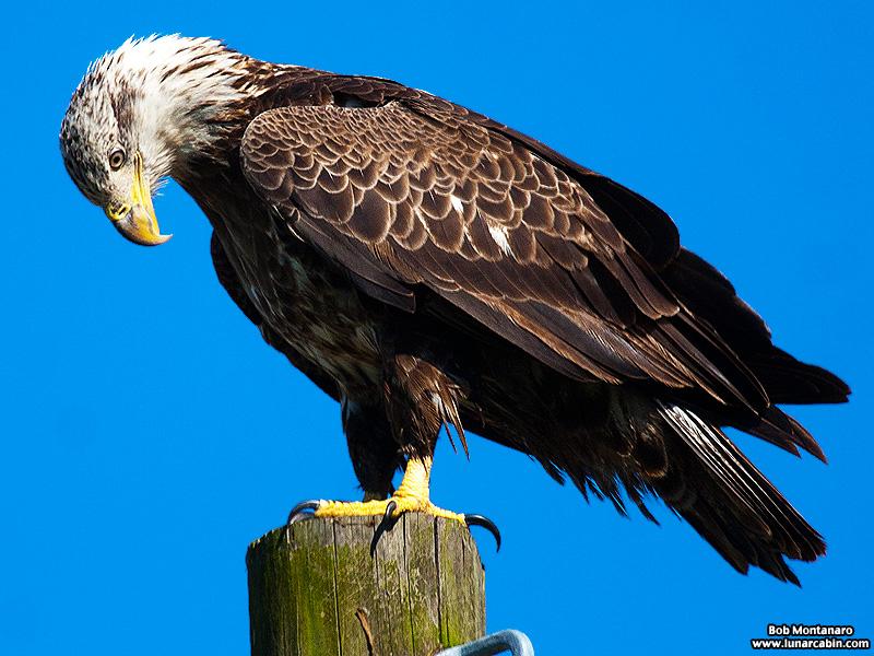 eagle_150107_3