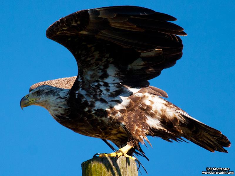eagle_150107_4