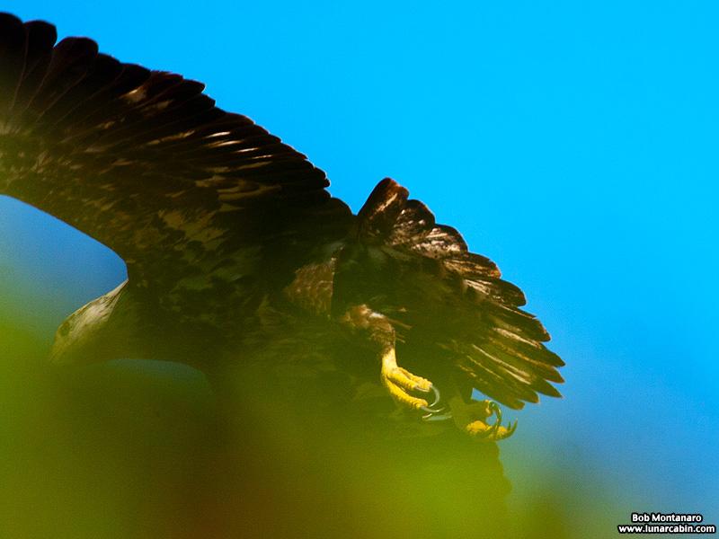 eagle_150107_5