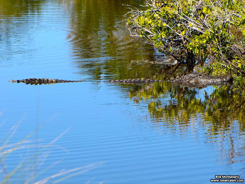 minwr_gators_6