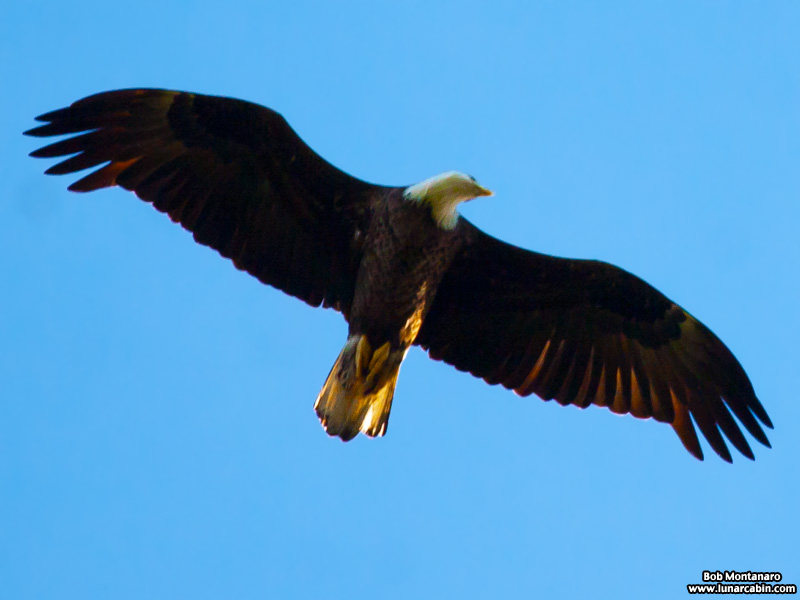 ORCA_Eagles_150207_8