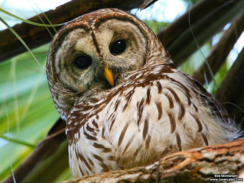 Owl_ORCA_Class_150202_1