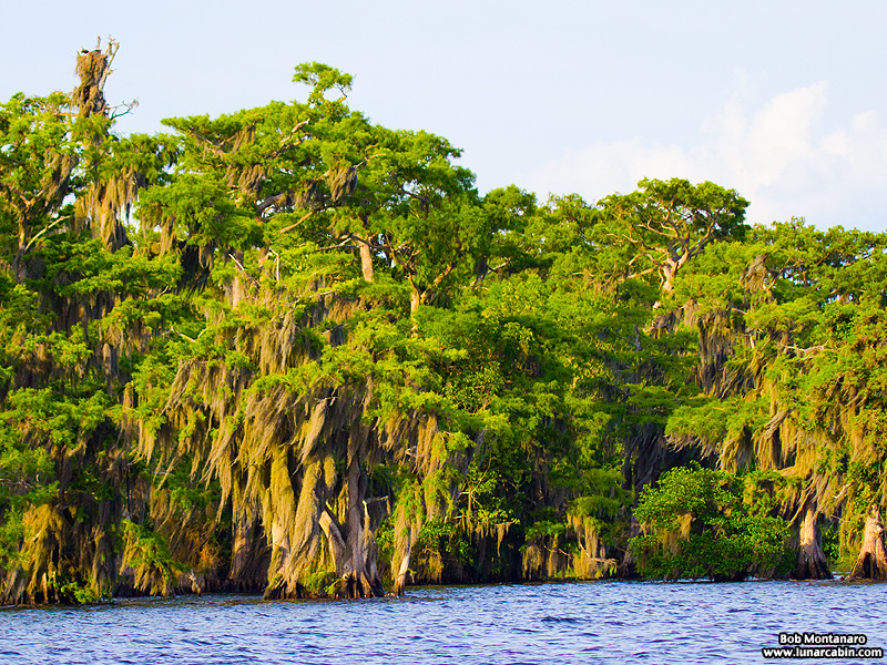 blue_cypress_lake_150419_10