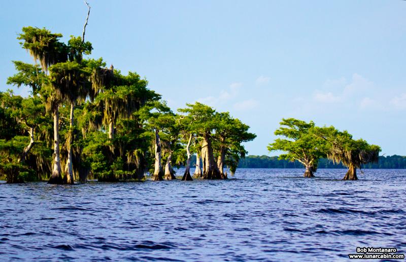 blue_cypress_lake_150419_6