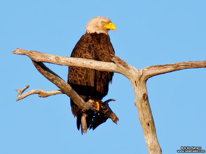 sebastian_eagles_150404_1