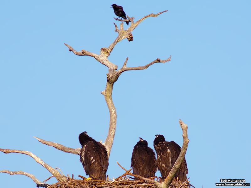 sebastian_eagles_150404_3