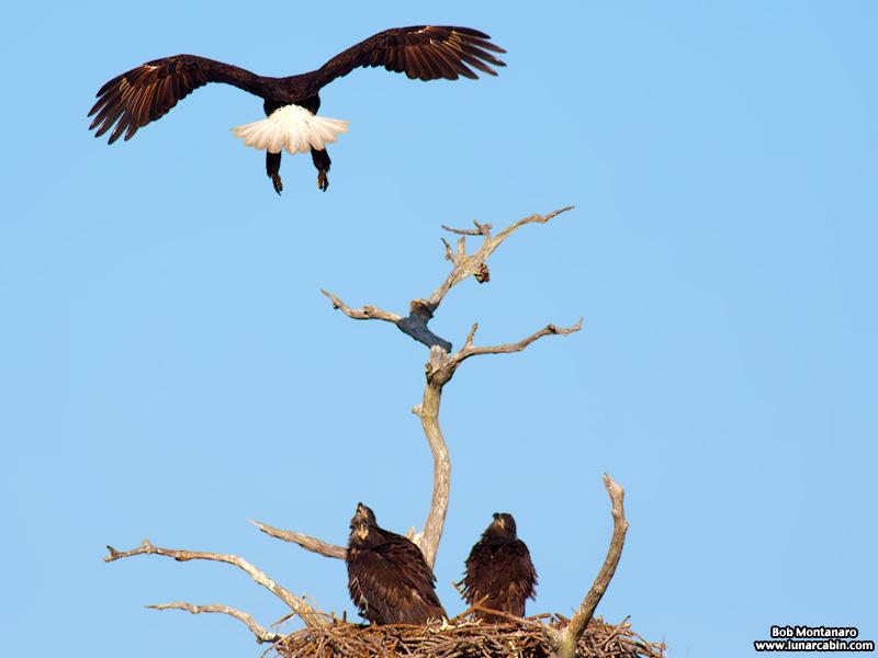 sebastian_eagles_150404_4
