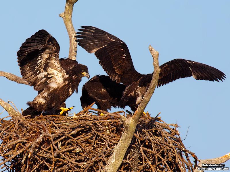 sebastian_eagles_150404_5