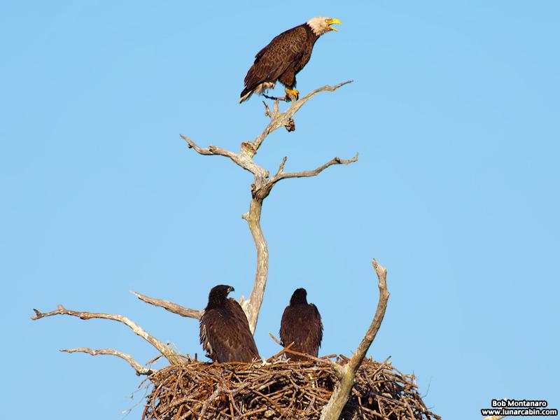sebastian_eagles_150404_6