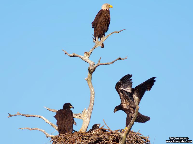 sebastian_eagles_150404_7