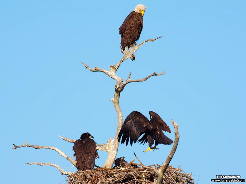 sebastian_eagles_150404_8