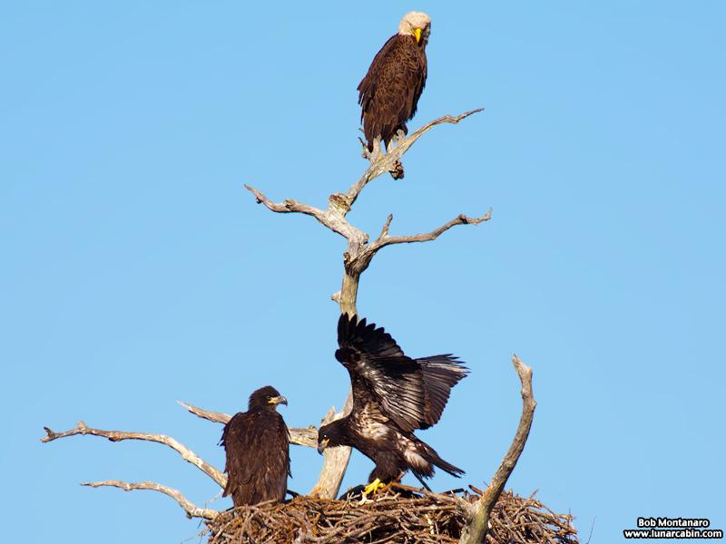 sebastian_eagles_150404_9