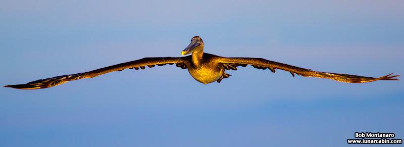 pelican_island_150815_4