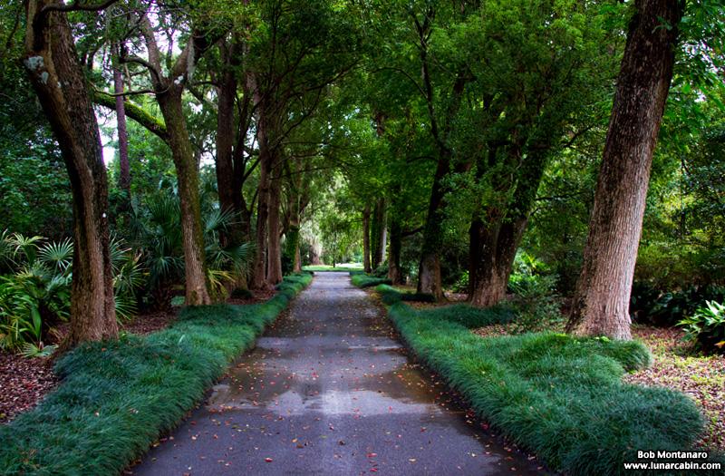 leu_gardens_150926_10