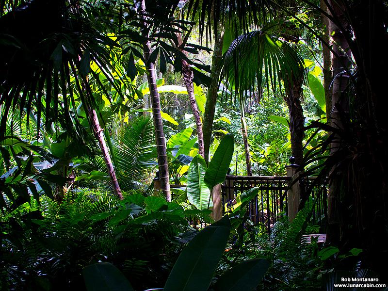 leu_gardens_150926_7