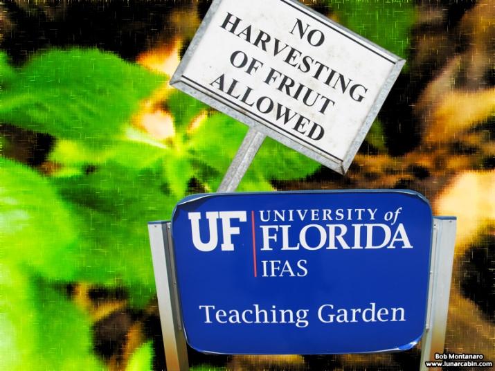 teaching_garden_150911_1