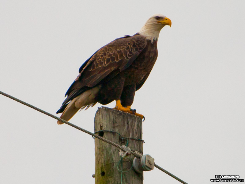eagle_a1a_151610_1