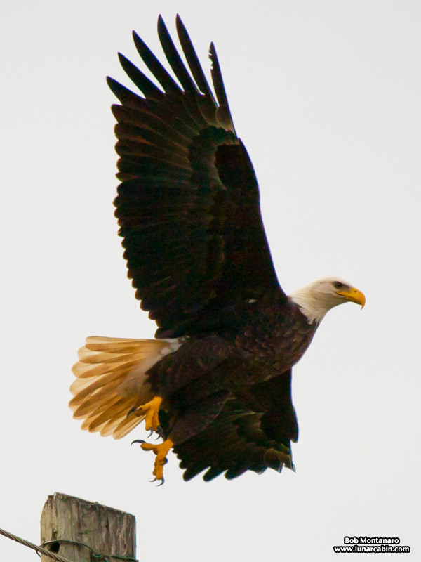 eagle_a1a_151610_2