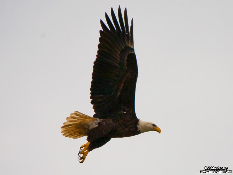 eagle_a1a_151610_3