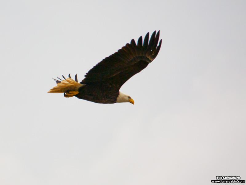 eagle_a1a_151610_5