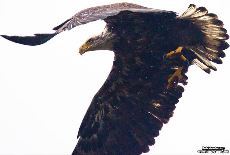eagle_160127_2