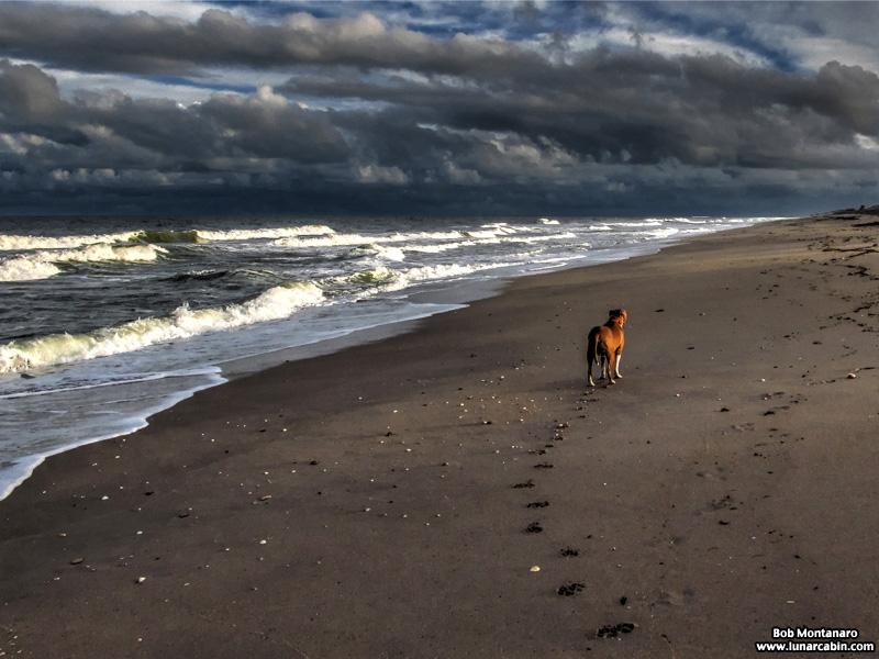 sam_on_stormy_beach_1601_1