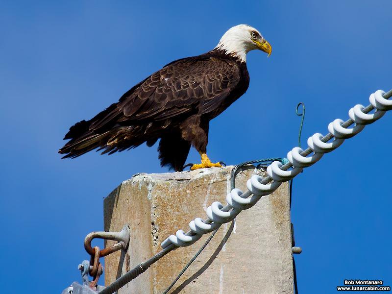 eagle_160222_1