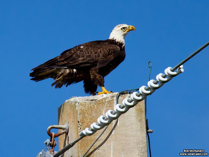 eagle_160222_2