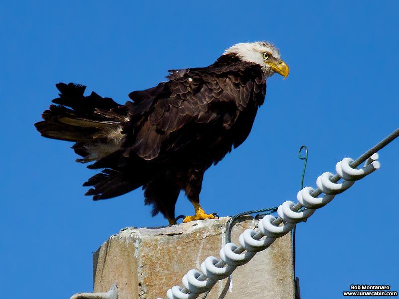 eagle_160222_3