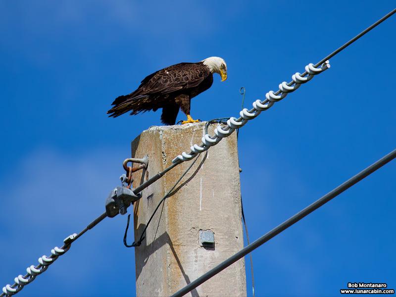 eagle_160222_4