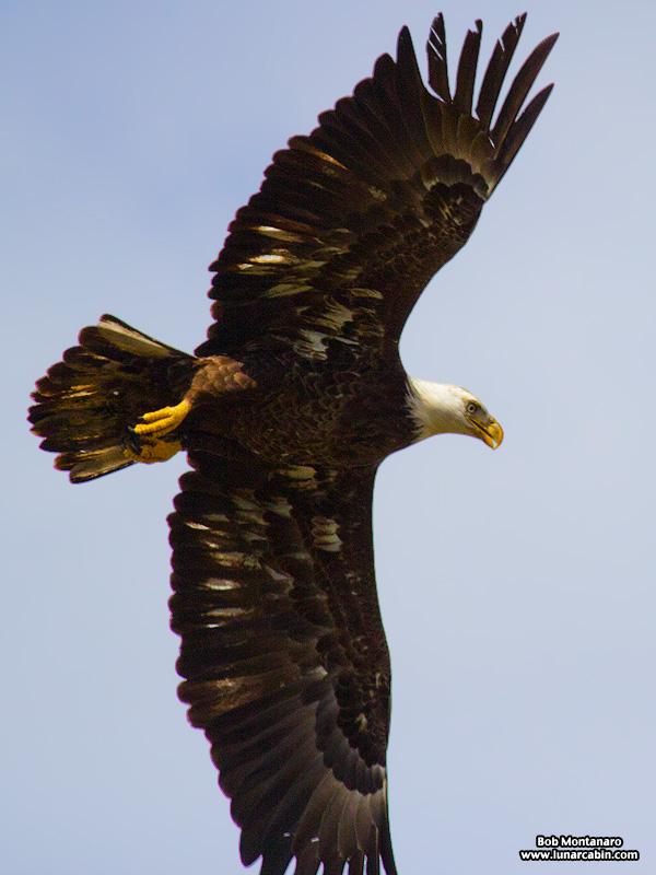 eagle_160222_5