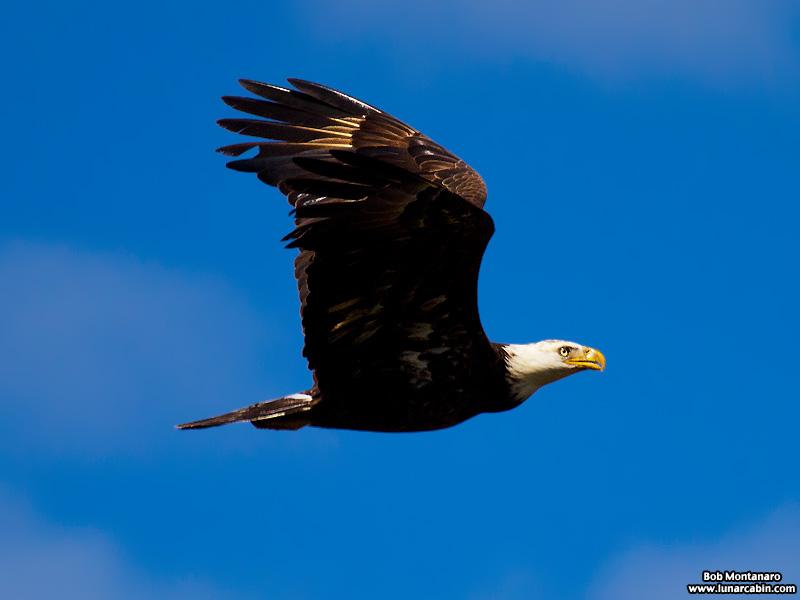 eagle_160222_6