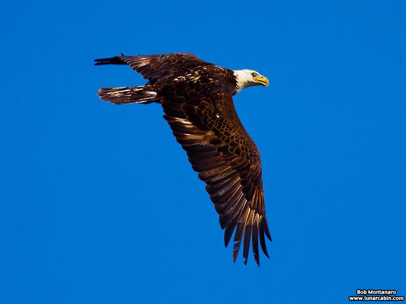 eagle_160222_7
